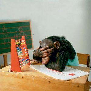обезьяна, счеты, интеллект